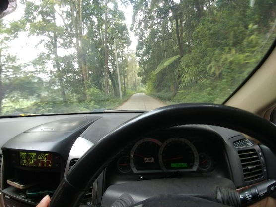 jalur rute batang dieng - hutan