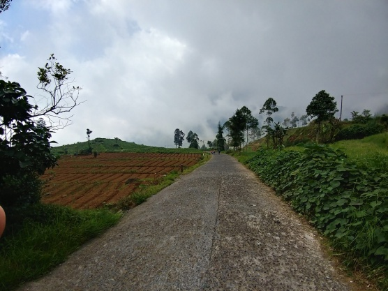 Rute jalur batang dieng